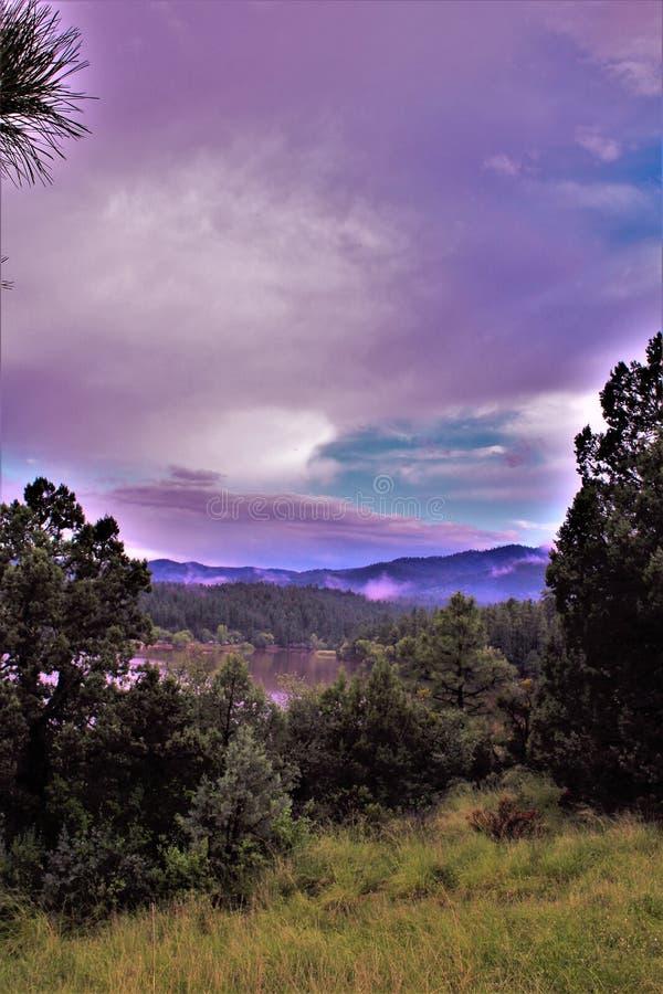 Lac lynx, secteur de garde forestière de Bradshaw, Prescott National Forest, état de l'Arizona, Etats-Unis photos stock
