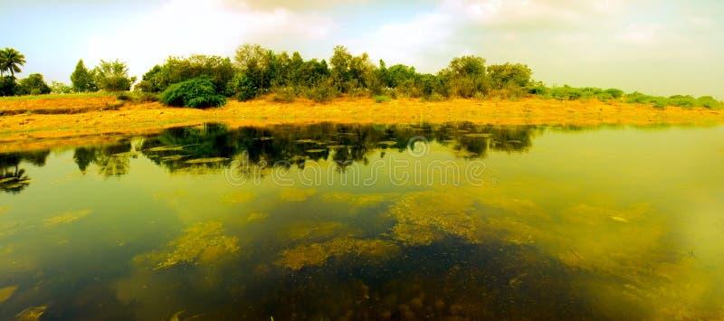 Lac marécageux images stock