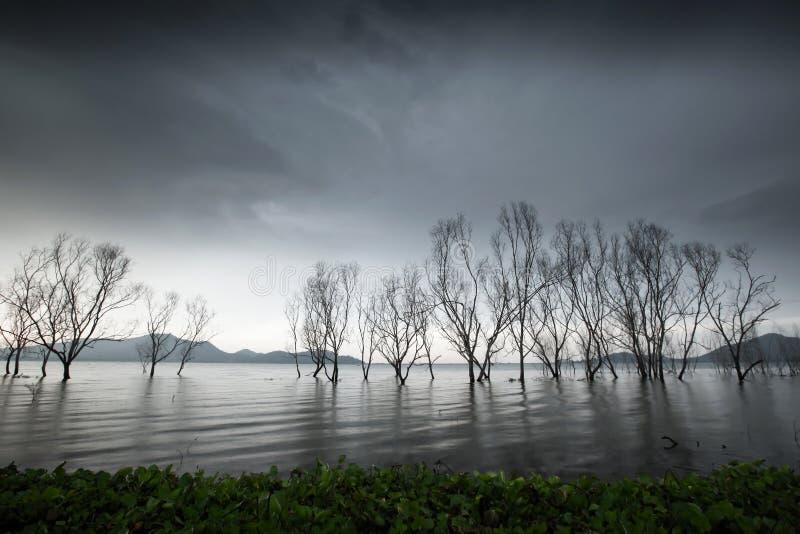 Lac mystérieux de forêt, troncs d'arbre sans feuilles d'imagination dans le lac, ciel gris de nuages, doucement vagues de lac fro image libre de droits