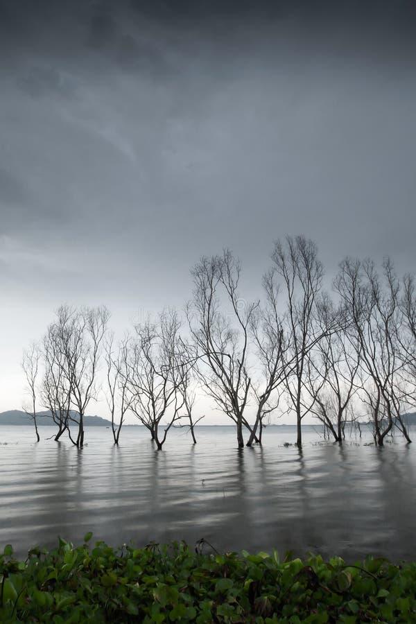 Lac myst?rieux de for?t, troncs d'arbre sans feuilles d'imagination dans le lac, ciel gris de nuages, doucement vagues de lac fro photographie stock