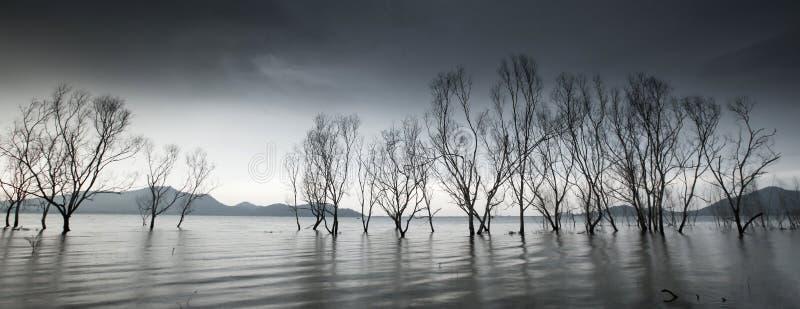 Lac myst?rieux de for?t, troncs d'arbre sans feuilles d'imagination dans le lac, ciel gris de nuages, doucement vagues de lac fro photo stock