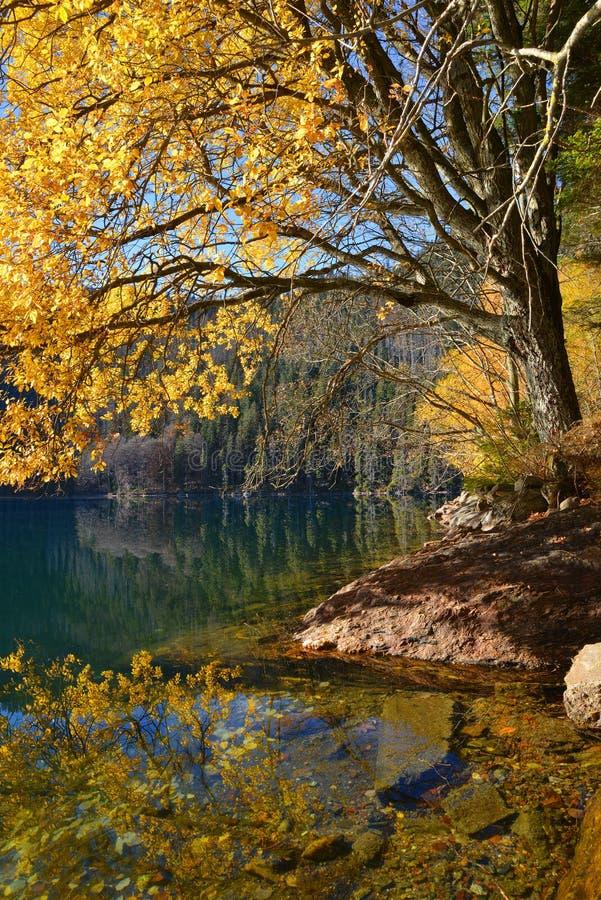 Lac noir, plus grand lac naturel en parc national Sumava photographie stock libre de droits