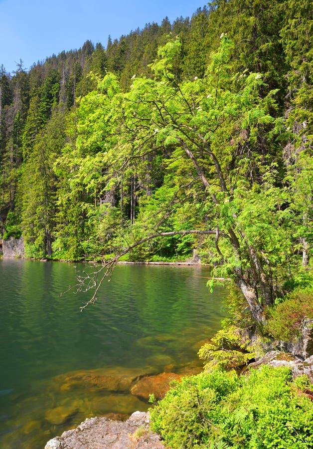 Lac noir, République Tchèque image stock