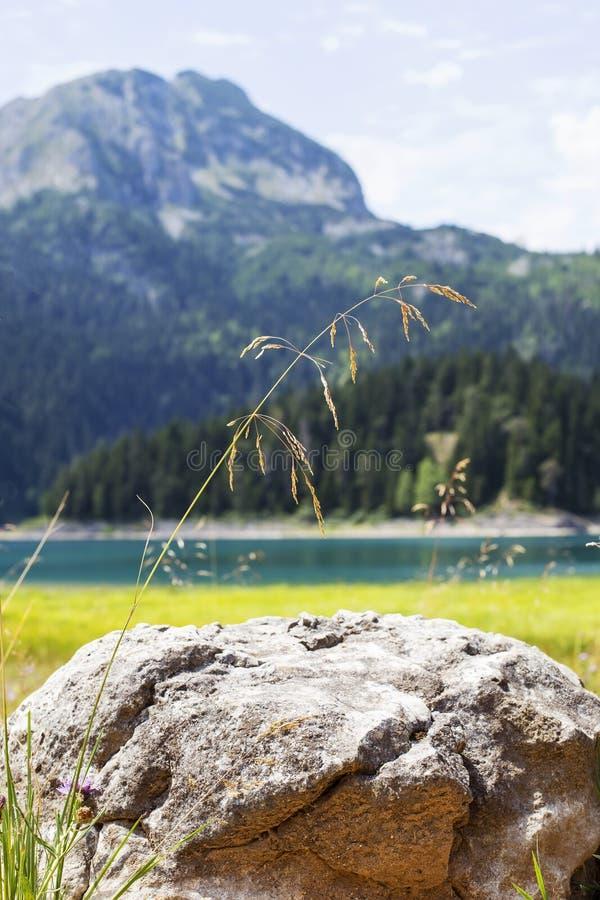 Lac noir sur la montagne de Durmitor dans Monténégro image libre de droits