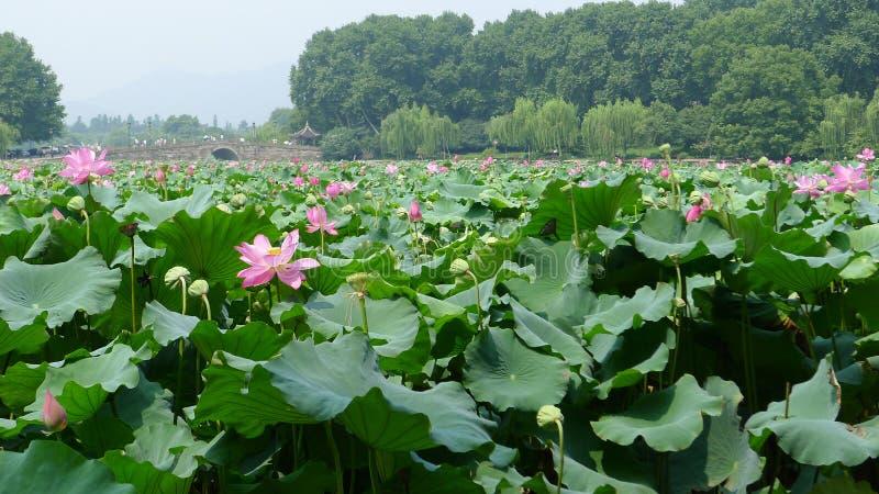 Lac occidental Hangzhou photos libres de droits