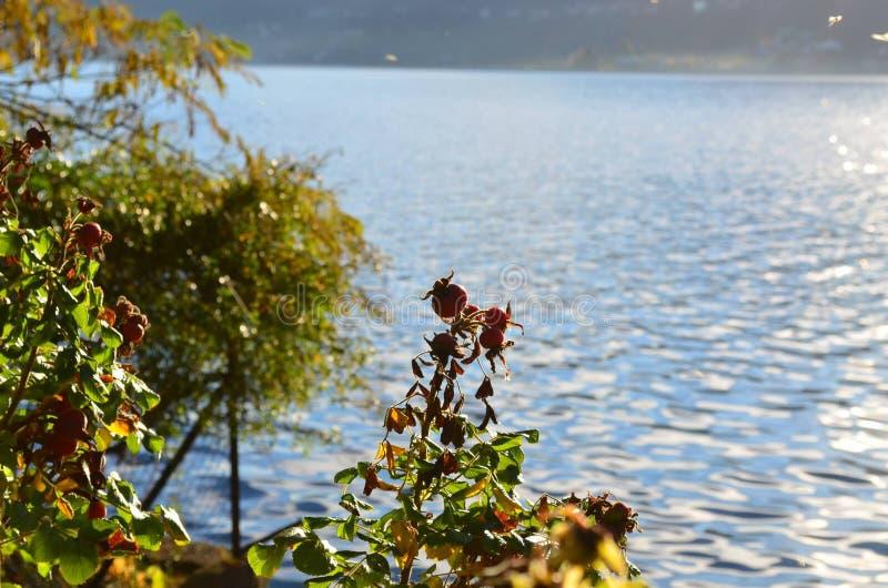 Lac Orta, emplacement Pettenasco image libre de droits