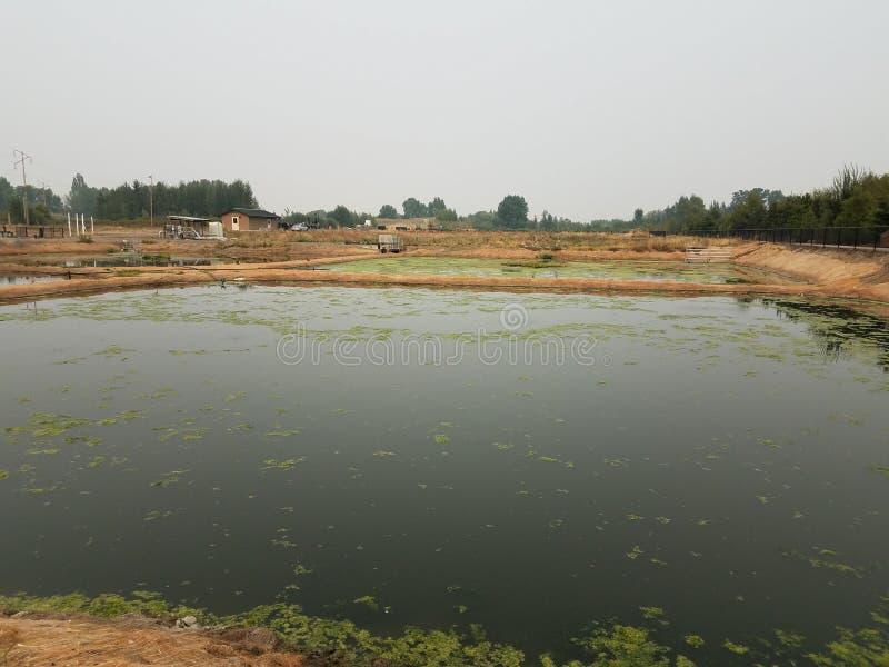 Lac ou étang avec les algues vertes et le tissu de aménagement brun image stock