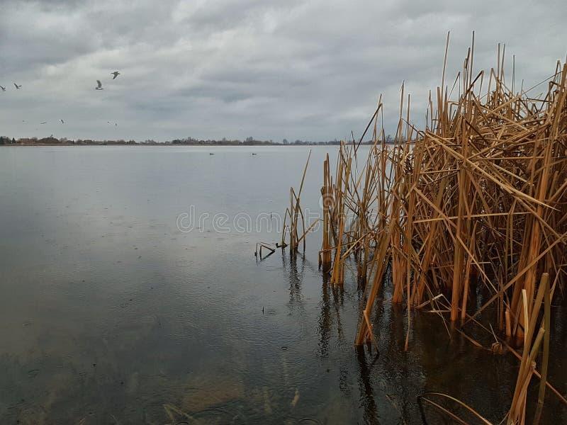 Lac par le temps pluvieux image stock