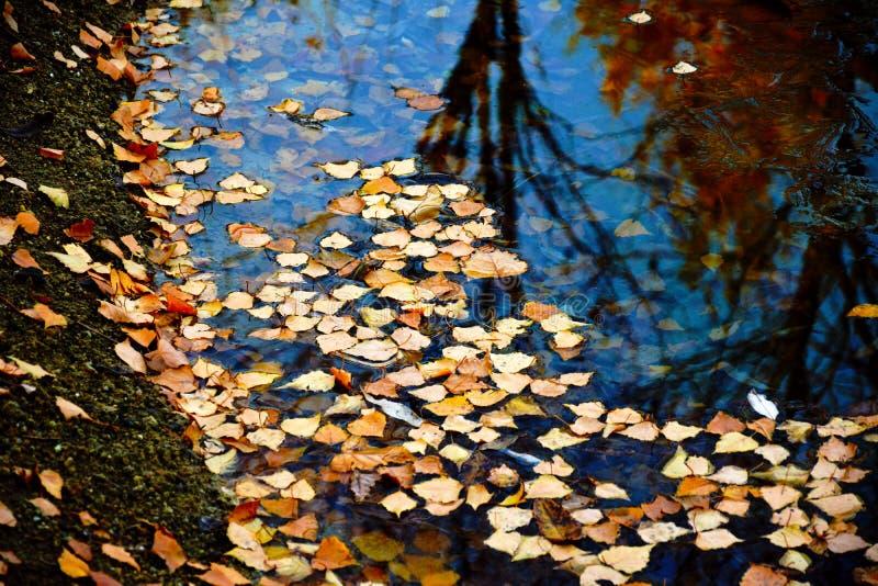 Lac pendant l'automne images libres de droits