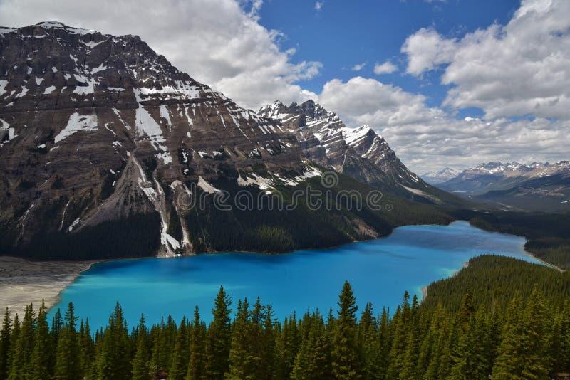 Lac Peyto en stationnement national de Banff photographie stock libre de droits