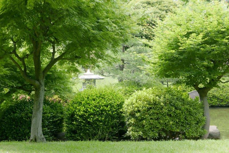 Plantes Japonaises Jardin De Plantes Vivaces Avec