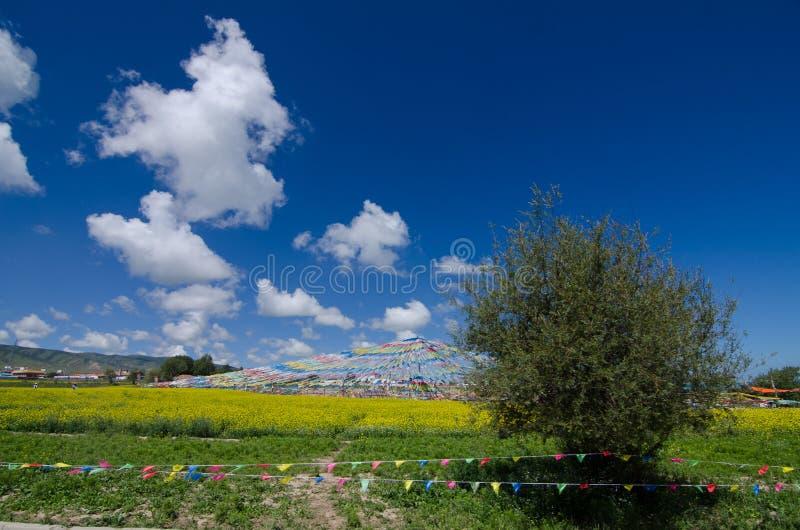 Lac Qinghai et fleur de viol photographie stock