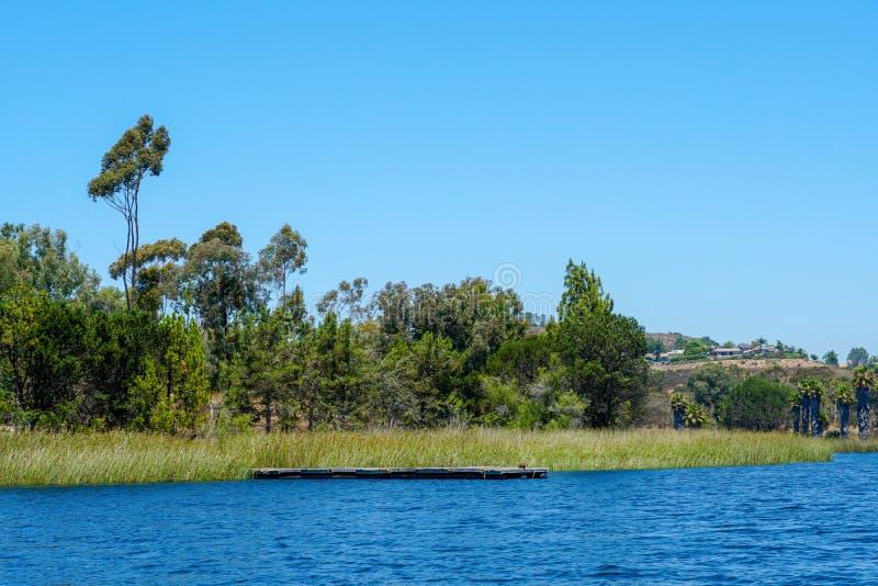 Lac reservoir avec l'eau bleue, des arbres et des usines indigènes de marécage photos libres de droits
