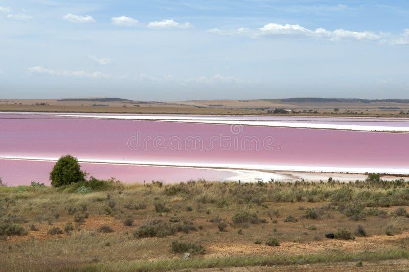 Lac rose en Australie photo libre de droits