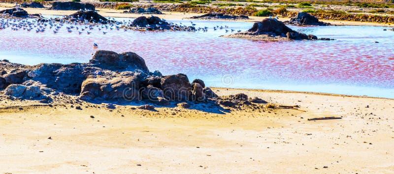 Lac rose en Espagne, phénomène peu commun, influence minérale sur le wat images libres de droits
