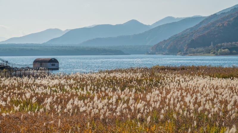 Lac Saiko avec le champ d'herbe images stock