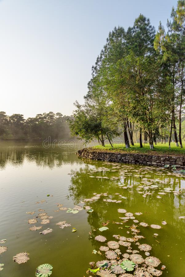 Lac scénique en parc le jour d'été Bois verts merveilleux photos stock