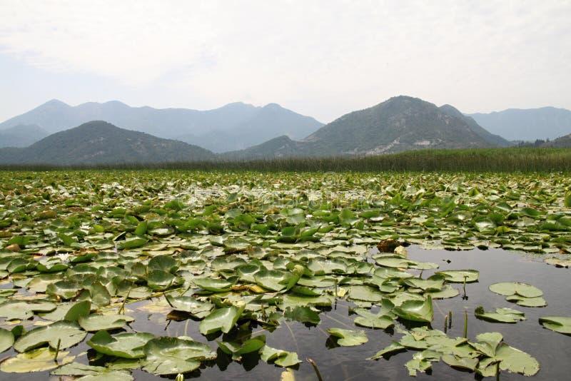 Lac Skadar, Monténégro photo stock