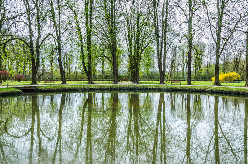 Lac spring, arbres verts photos stock