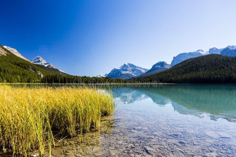 Lac Sunwapta, Jasper National Park dans Alberta, Canada images stock
