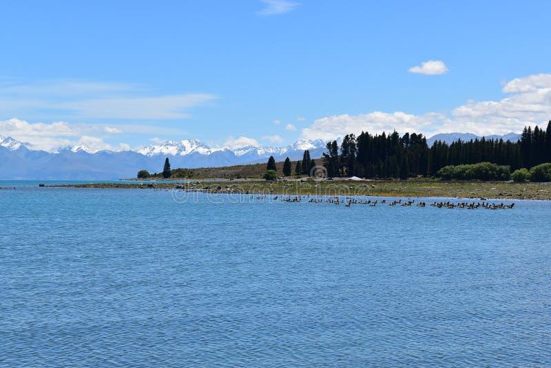 Lac Tekapo, île du sud du Nouvelle-Zélande photo stock
