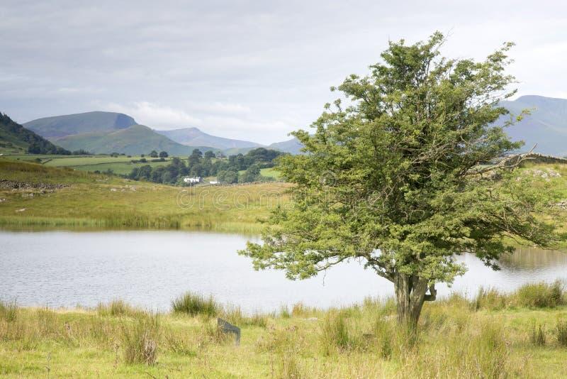 Lac Tewet le Tarn, Keswick ; Secteur de lac photo libre de droits