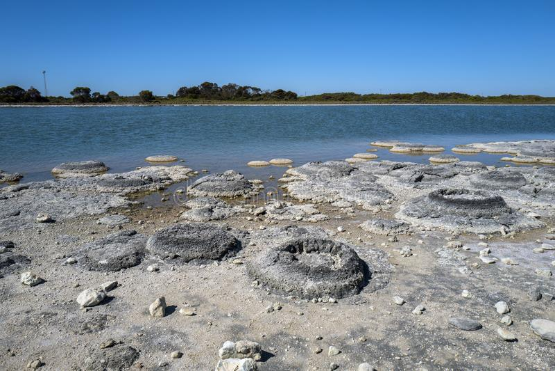 Lac Thetis, Australie occidentale photo libre de droits