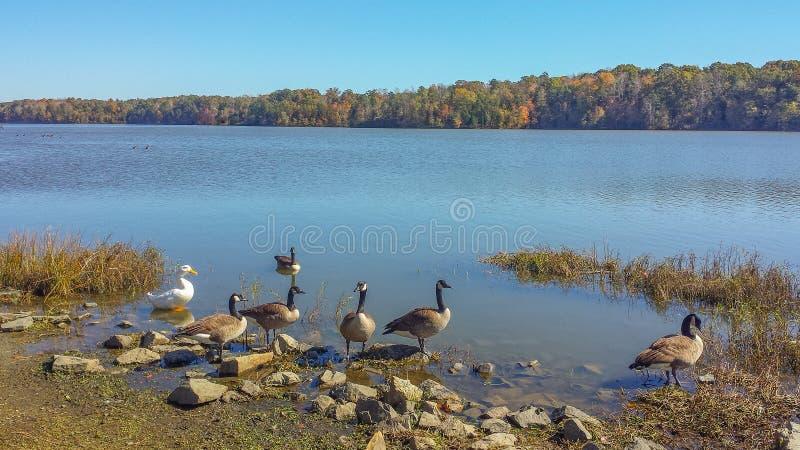 Lac Thom-A-Lex à Lexington et Thomasville, la Caroline du Nord image stock