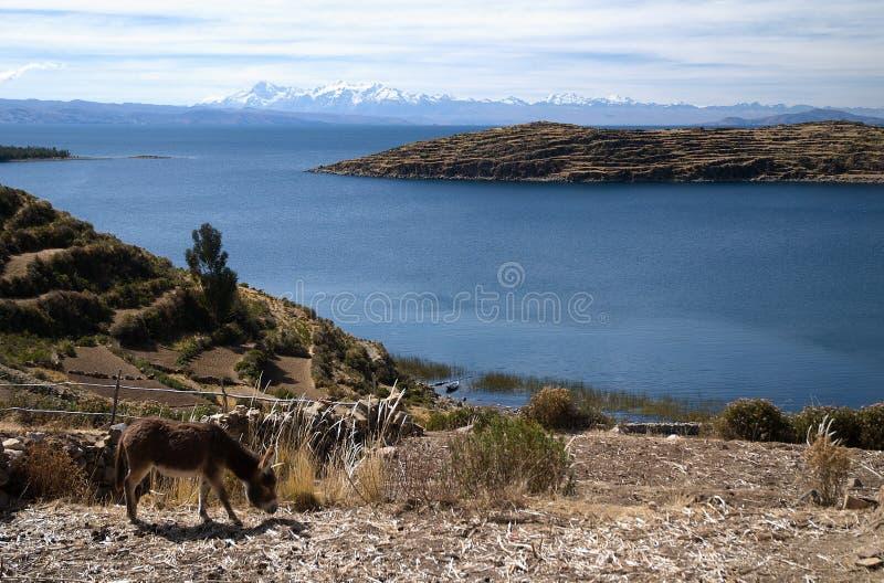 Lac Titicaca en Bolivie image libre de droits