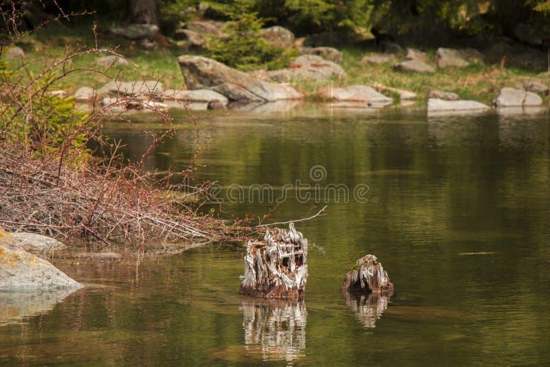 Lac tranquille photographie stock libre de droits