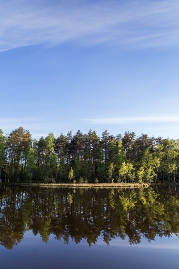Lac tranquille et calme et réflexion d'une forêt photographie stock libre de droits
