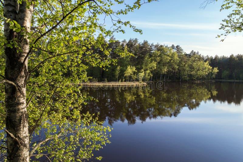 Lac tranquille et calme et réflexion d'une forêt photo libre de droits
