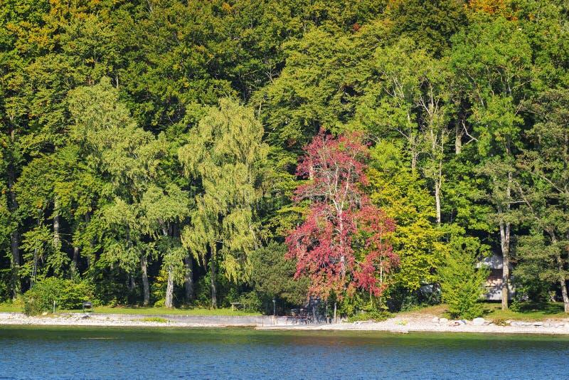 Lac trees tutzing photos stock