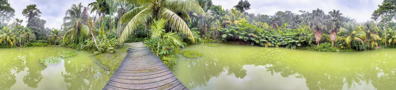 Lac tropical dans la forêt de Cranbrook, Jamaïque images libres de droits