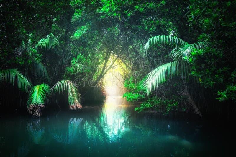 Lac tropical dans la forêt tropicale de palétuvier Sri Lanka image libre de droits