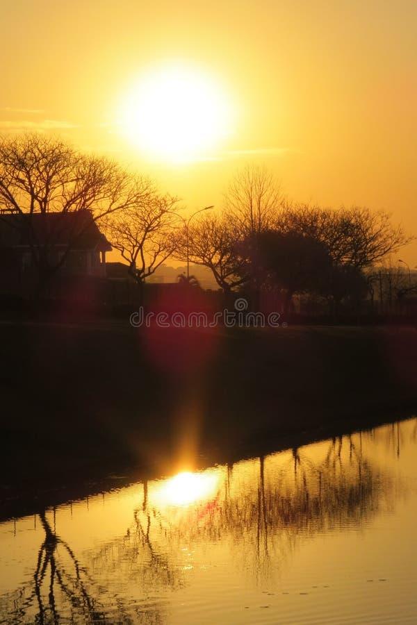 Lac, usines et coucher du soleil image libre de droits
