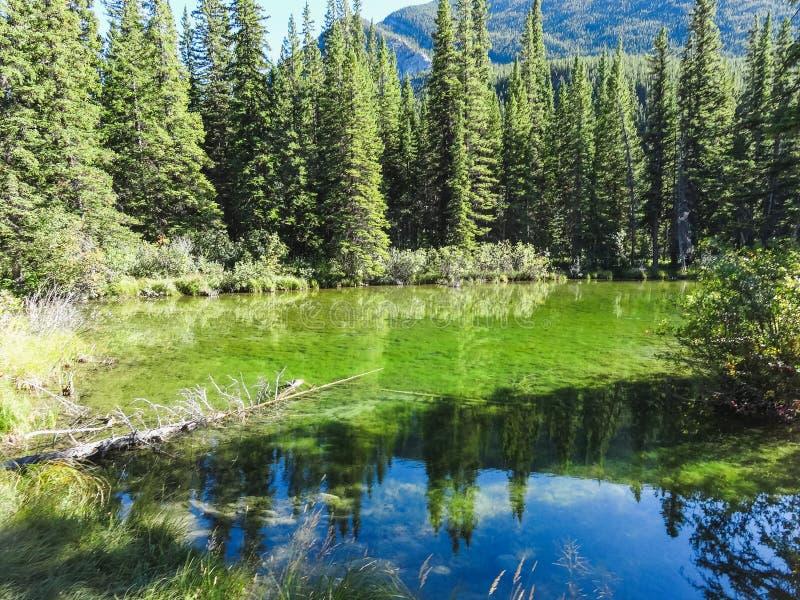 Lac vert en Colombie-Britannique de parc national de banff photos libres de droits