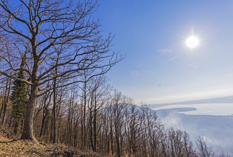 Lac Vico woods en Italie photo stock