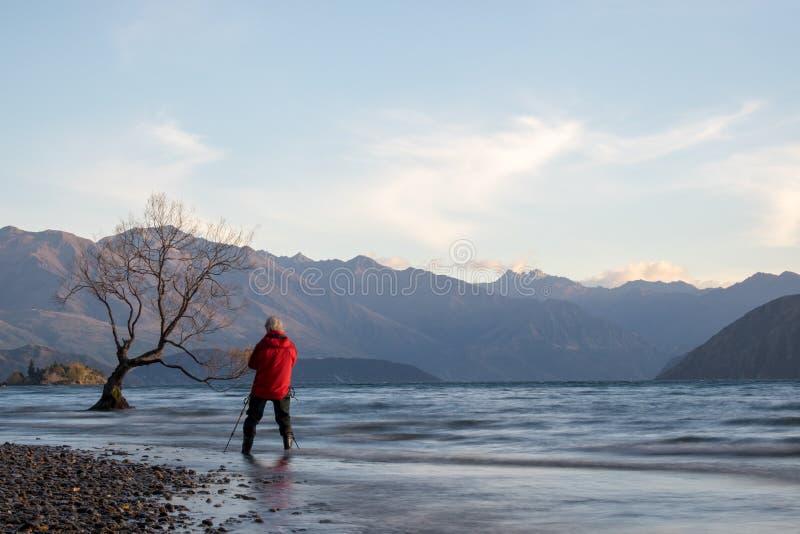 Lac Wanaka en automne avec l'arbre célèbre photographie stock libre de droits