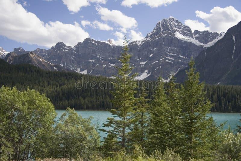 Lac waterfowl images libres de droits