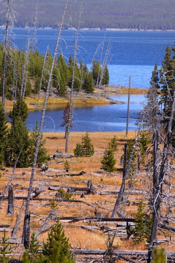 Lac Yellowstone image libre de droits