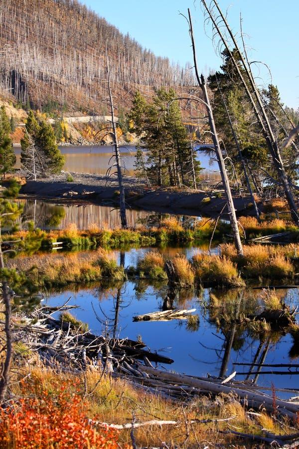 Lac Yellowstone photos stock