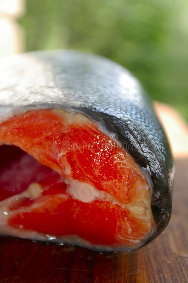 Lachsfische lizenzfreie stockfotografie