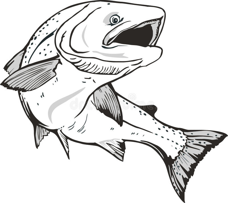 Lachsfische lizenzfreie abbildung