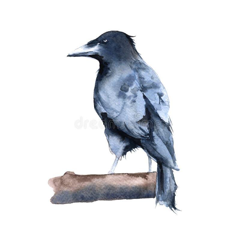 Lack Raven. Isolated on white background. vector illustration