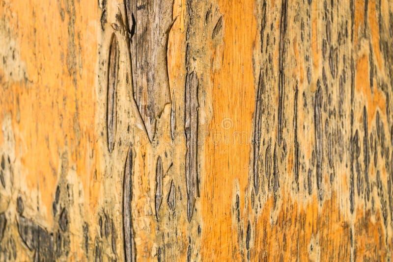 Lackiert, Oberfläche einer alten Holztürnahaufnahme abziehend lizenzfreie stockfotografie