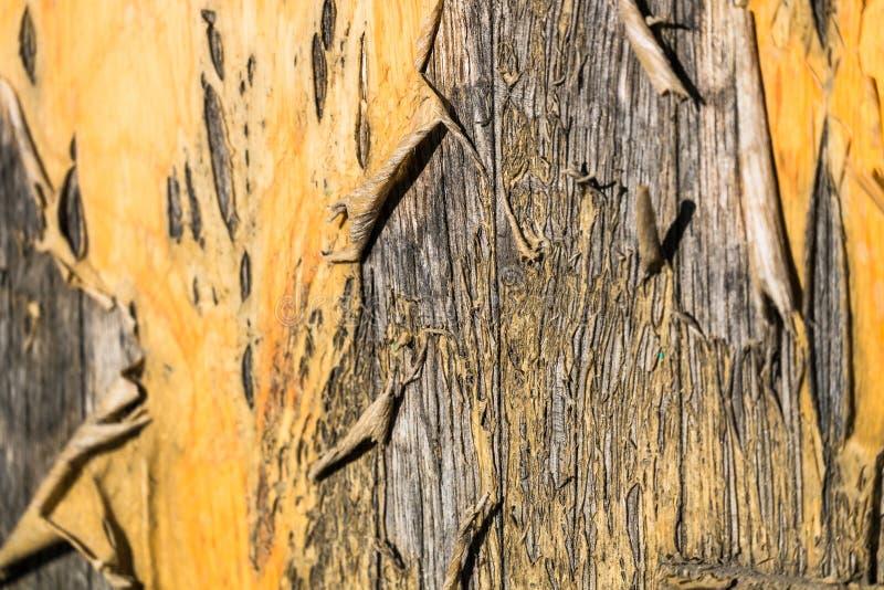Lackiert, Oberfl?che einer alten Holzt?rnahaufnahme abziehend lizenzfreie stockfotos