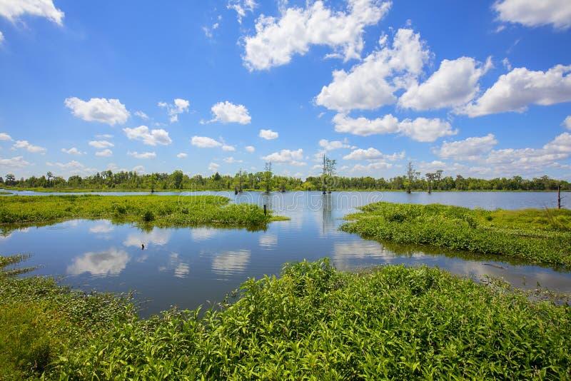 Lacs dans des marécages de la Floride photo libre de droits