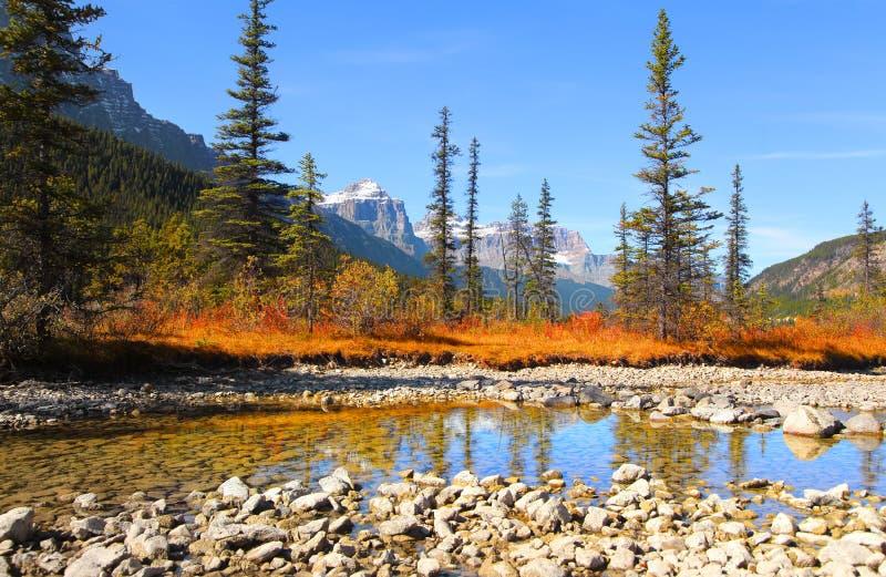 Lacs waterfowl en parc national photographie stock