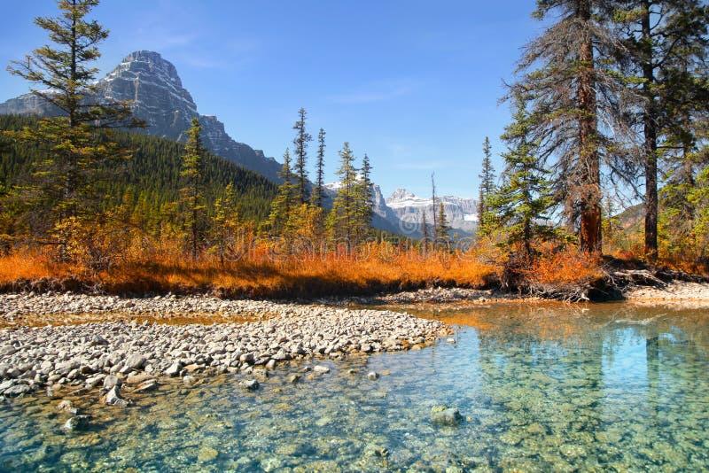 Lacs waterfowl en parc national de Banff image stock